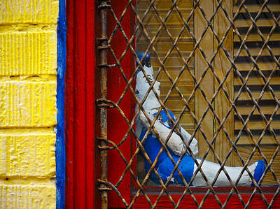 Bird Cage Print by Skip Hunt