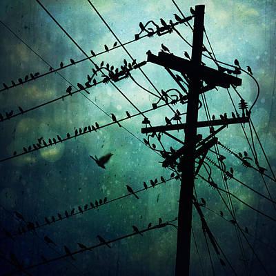 Blackbird Photograph - Bird City by Trish Mistric