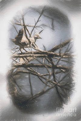 Naturalistic Photograph - Bird From Woodslost Way by Jorgo Photography - Wall Art Gallery
