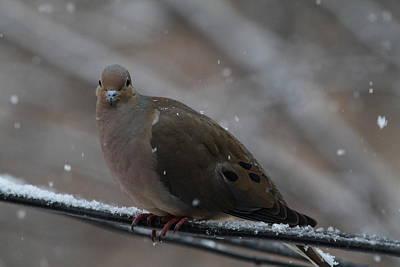 Bird In Snow - Animal - 011312 Print by DC Photographer