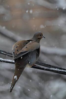 Birds Photograph - Bird In Snow - Animal - 01133 by DC Photographer