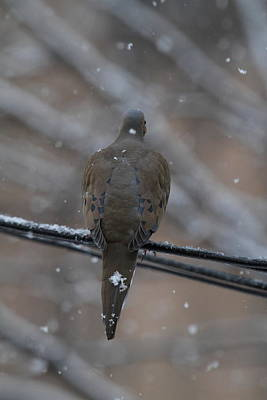 Bird In Snow - Animal - 01135 Print by DC Photographer