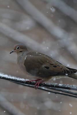 Bird In Snow - Animal - 01136 Print by DC Photographer