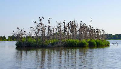 Egret Digital Art - Bird Island by Bill Cannon