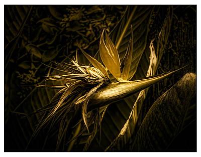 Oldzero Photograph - Bird Of Paradaise by Steve Benefiel