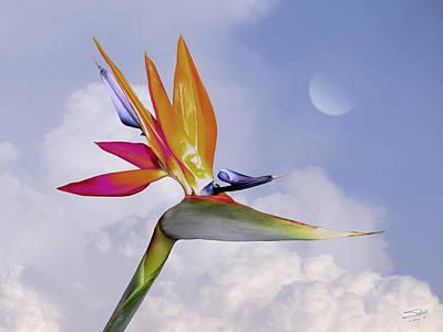 Florida Flowers Digital Art - Bird Of Paradise Aloft by Schwartz
