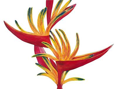 Bird Of Paradise II Print by Lisa Bentley