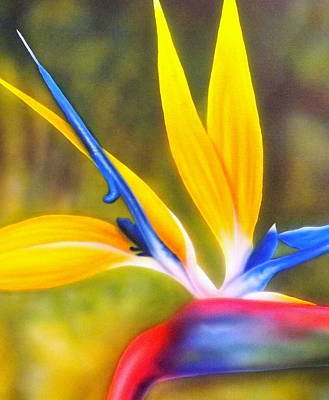 Bird Of Paradise Revisited Print by Darren Robinson