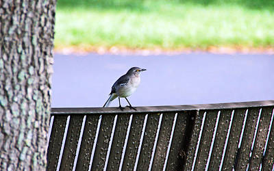Bird On Bench Print by Aimee L Maher Photography and Art Visit ALMGallerydotcom
