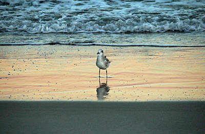 Abstract Beach Landscape Digital Art - Bird Reflection by Cynthia Guinn
