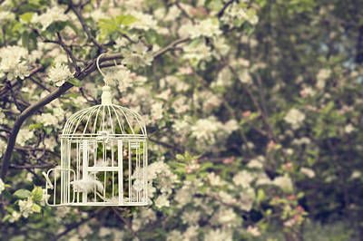 Cage Photograph - Birdcage In Blossom by Amanda And Christopher Elwell
