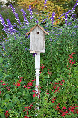 Salvia Photograph - Birdhouse In A Garden With Mexican Bush by Panoramic Images