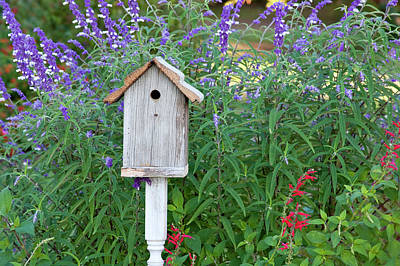 Salvia Photograph - Birdhouse In Garden With Mexican Bush by Richard and Susan Day