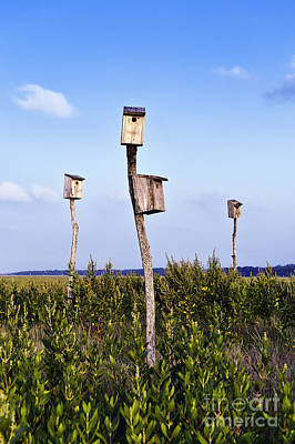 Birdhouses In Salt Marsh. Print by John Greim