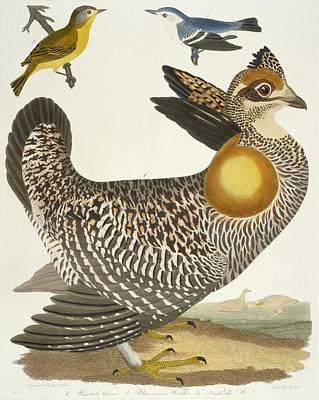 Birds  Print by Alexander Wilson