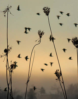 Birds In The Sky Print by Gothicolors Donna Snyder