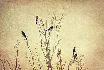 Flypaper Textures Photograph - Birds In The Tree II by Christine Hauber