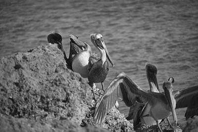 Boac Photograph - Birds Of A Feather Bw by Joel P Black