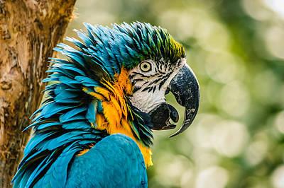 D700 Photograph - Birds Of A Feather by Chris Modlin