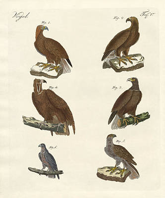 Vulture Drawing - Birds Of Prey by Splendid Art Prints