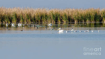 Birds Enjoying The Freshwater Marsh Print by Debra Martz