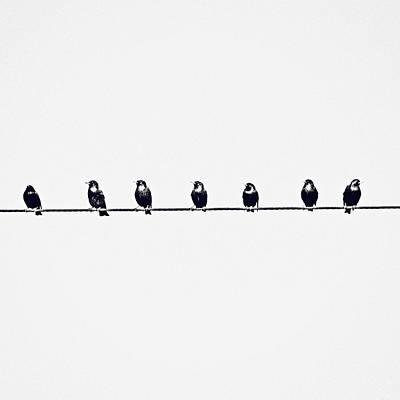 Birds On A Wire Print by Jessie Gould