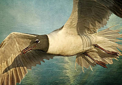 Web Of Life Photograph - Birds - Seagulls - Laughing Gull by HH Photography of Florida