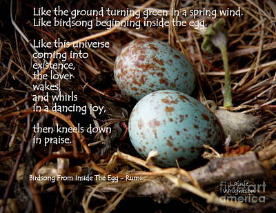 Birdsong From Inside The Egg Print by Lainie Wrightson