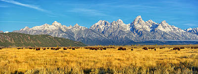 Bison Photograph - Bison Beneath The Tetons Panorama by Greg Norrell