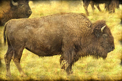 Bison Print by James BO  Insogna