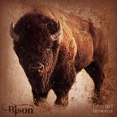 Bison Mixed Media - Bison by Mindy Bench