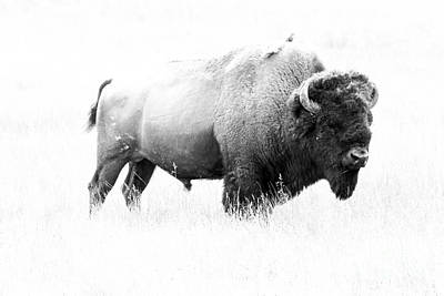 Montana Digital Art - Bison - Monochrome by Christiane Schulze Art And Photography