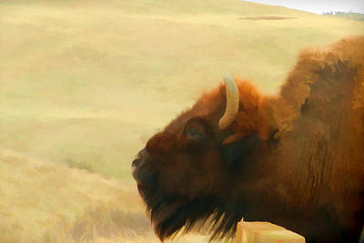 Bison Digital Art - Bison Or Buffalo In South Dakota by Cathy Anderson