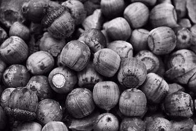 Squirrel Photograph - Black And White Acorns by Dan Sproul
