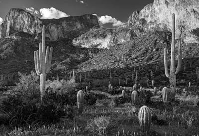Mountain Photograph - Black And White Desert Cactus At Picacho Peak by Dave Dilli