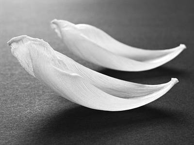 Abstract Black And White Flower Art Work Photography Print by Artecco Fine Art Photography