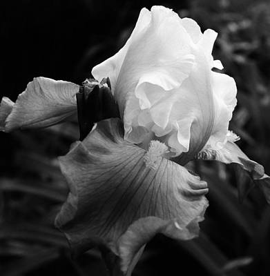 Amature Photograph - Black And White Iris 2 by Bruce Bley