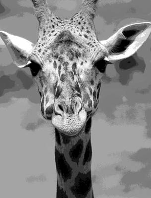 Giraffe Mixed Media - Black And White Peek A Boo Giraffe by Dan Sproul