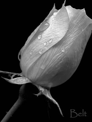 Artist Christine Belt Photograph - Black And White Snickerhaus Rose by Christine Belt