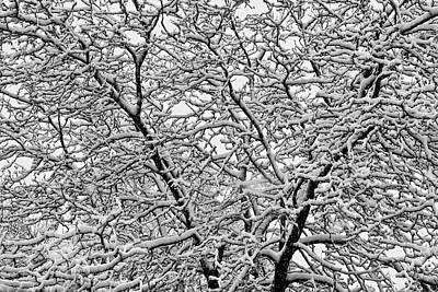 Corporate Art Photograph - Black And White Snowy Tree Abstract by James BO  Insogna