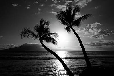 Black And White Tropical Print by Pierre Leclerc Photography