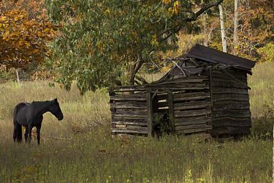 Murray Kentucky Photograph - Black Beauty by Amber Kresge