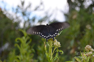 Butterfly In Motion Photograph - Black Butterfly Wing Macro Motion Blur At Bottom Of Grand Canyon by Shawn O'Brien