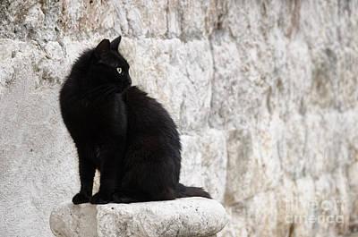 Black Cat Photograph - Black Cat Against A Stone Wall by Oscar Gutierrez