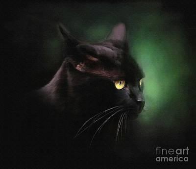 Kittens Digital Art - Black Cat by Robert Foster