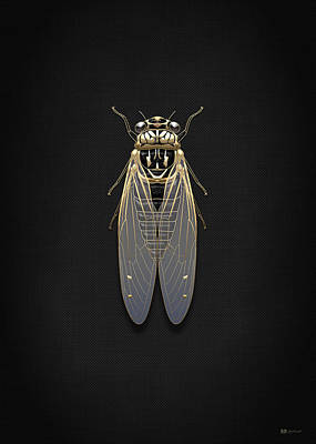 Black Cicada With Gold Accents On Black Canvas Print by Serge Averbukh