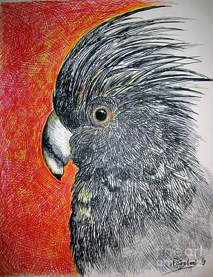 Cockatoo Drawing - Black Cockatoo by Roberto Gagliardi