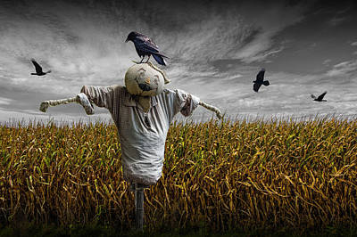 Black Crows Over A Cornfield With Scarecrow And Gray Sky Print by Randall Nyhof