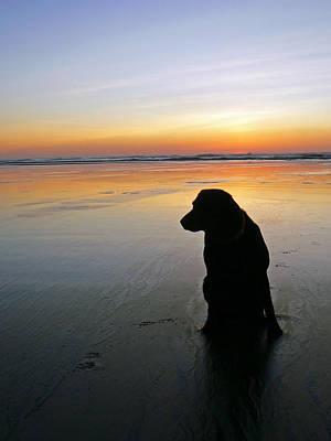 Black Dog Sundown Print by Pamela Patch