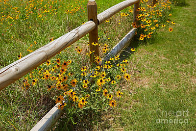 Black Eyed Susans In A Wildflower Meadow Print by Louise Heusinkveld